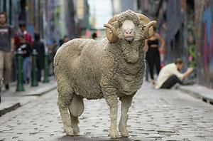 一个发掘过无数设计师人才的大奖 初衷竟然是为了推广羊毛