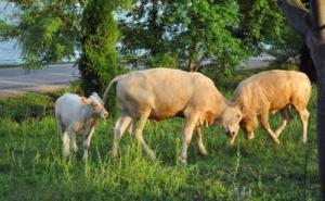 1973年出生属牛女2021年运势 49岁牛女2021年本命年命运如何